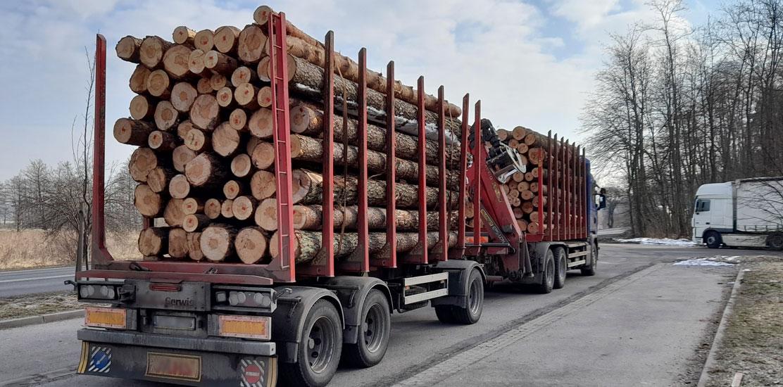 Zestaw pojazdów, którym wykonywany był przewóz drewna.