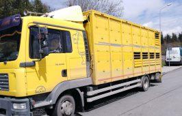 Inspektorzy zatrzymali do kontroli pojazd, którym przewożone były zwierzęta ze Słowacji do Polski.